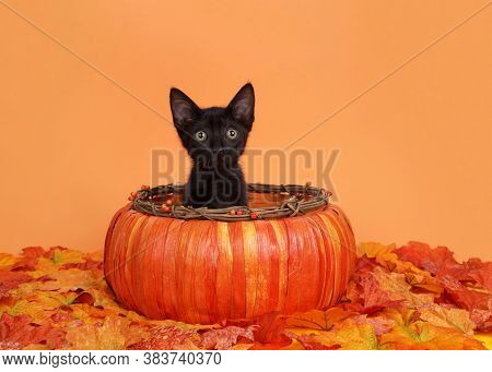 Adorable Tiny Black Kitten Sitting In An Autumn Pumpkin Basket Surrounded By Autumn Leaves, Orange B