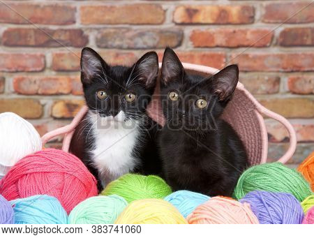 Black Kitten And Tuxedo Kitten Peaking Out Of A Pink Yarn Basket Surrounded By Colorful Balls Of Yar