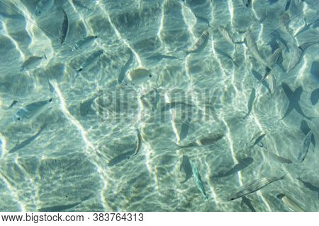Seascape From Sea Shore In Summer Season For Background