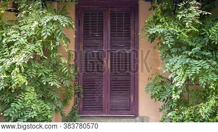 The Old Closed Wooden Shutters Of The House, Next To The Thickets Of Wild Grapes.