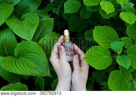 Womans Hands With Essential Oil On Green Nature Background. Essence Liquid Cosmetic. Perfume.aromath