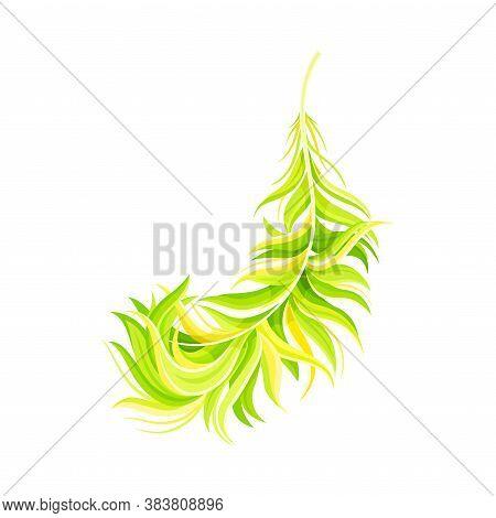 Green Bird Feather With Nib As Avian Plumage Vector Illustration