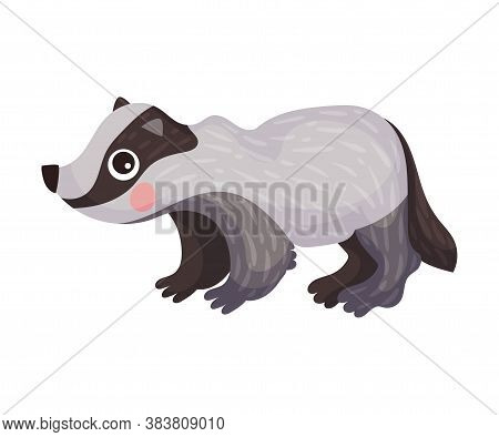 Cute Badger As Carnivore Forest Animal Vector Illustration