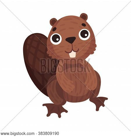 Funny Beaver Rodent As Forest Animal Vector Illustration