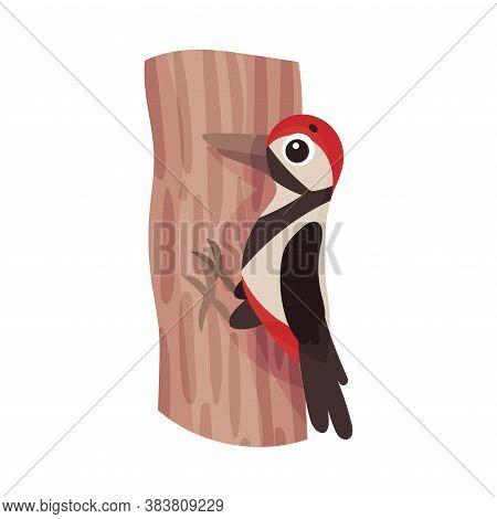 Woodpecker Sitting On Tree Trunk As Forest Bird Vector Illustration