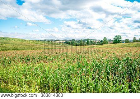 Beautiful Environment Landscape Of Green Field Cornfield, Corn Field And Sky With Beautiful Clouds,