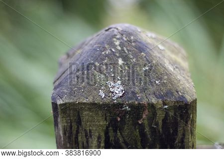 Damp Old Wooden Fence Post Showing Mould And Lichen Growth