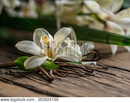 Dried vanilla sticks and vanilla orchid flower on a wooden table. Close-up.