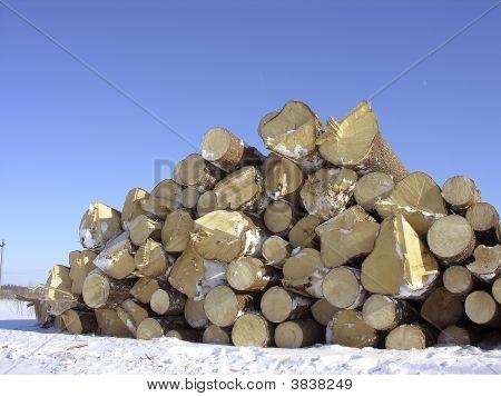 Fire Wood On Snow