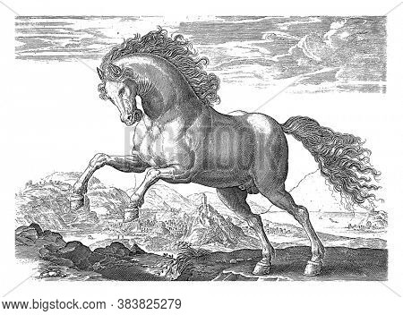 Wild Horse, anonymous, after Hendrick Goltzius, after Jan van der Straet, 1624 - before 1648 A wild horse, prancing to the left. In the background a city on a coast, vintage engraving.