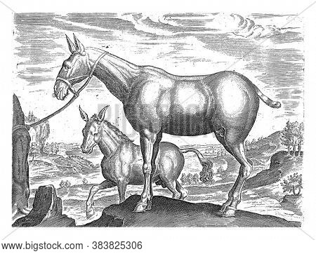 Mule and Donkey, anonymous, after Philips Galle, after Jan van der Straet, 1624 - before 1648 In the foreground a mule. In the background a donkey, vintage engraving.