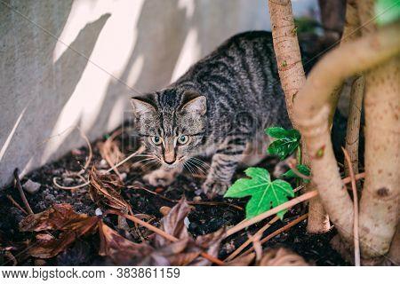 Young cat exploring a garden