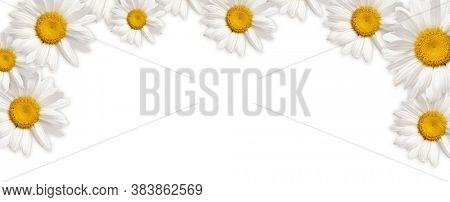 Frame of White camomile flower on horizontal background.