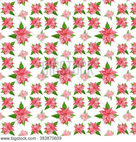 Christmas Pattern With Poinsettia. Pink Poinsettia Flower With Green Leaves On A White Background. D
