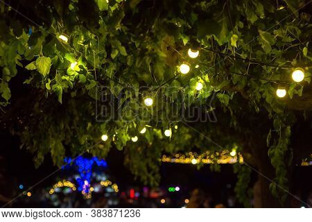 Garland Of Light Bulbs Glowing With Warm Light Suspended From Tree Branches In Backyard Garden With