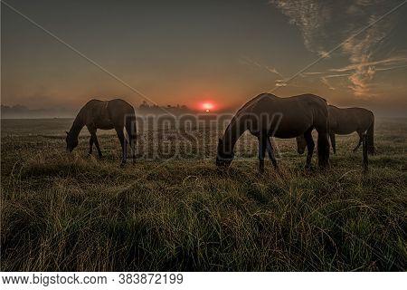 Horses Grazing A Misty Morning  In The Sunrise, Holl, Denmark, August 14, 2020
