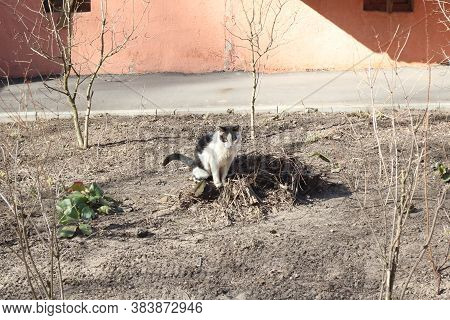 White Cat Pissing In A Flowerbed Close Up