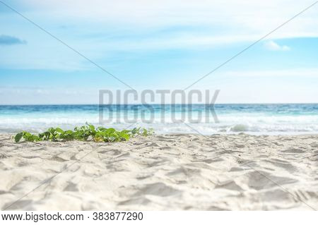 Sandy Beach With Goat's Foot Creeper And Blue Sea Background