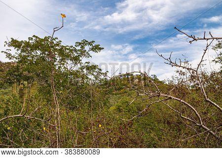 Baja California Sur, Mexico - November 23, 2008: Dry Forests Of Sierra De La Laguna. Dense Green And