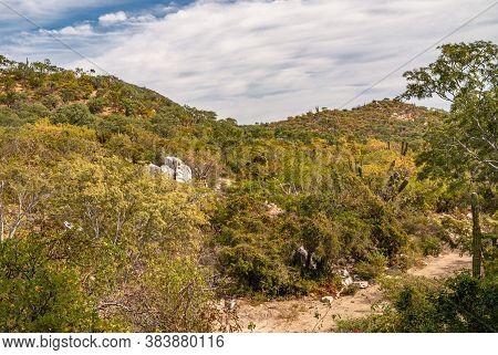 Baja California Sur, Mexico - November 23, 2008: Dry Forests Of Sierra De La Laguna. Hills Covered B