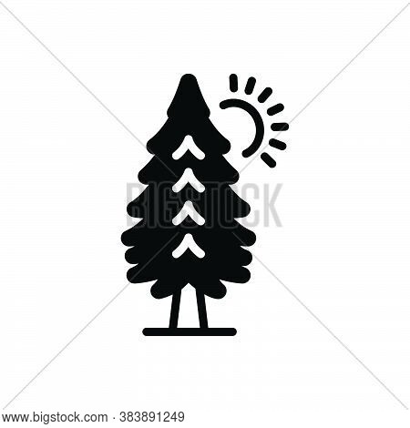 Black Solid Icon For Pine-trees Pine Trees Forest Fire-tree Evergreen Lake Timber Leaf Botany Foliag