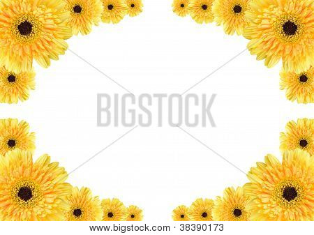 Yellow Daisy Frame