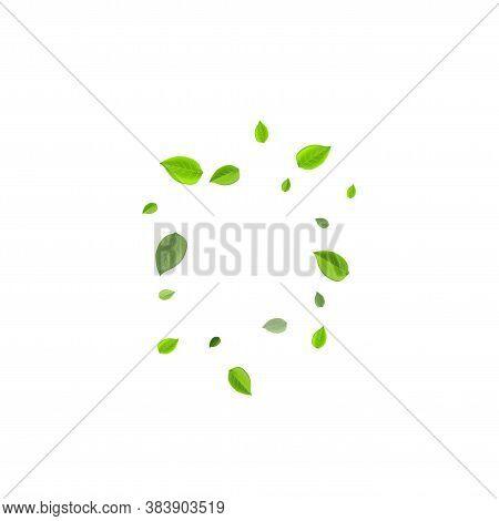 Mint Foliage Organic Vector Banner. Swirl Greens Branch. Green Leaves Tea Plant. Leaf Transparent Wa