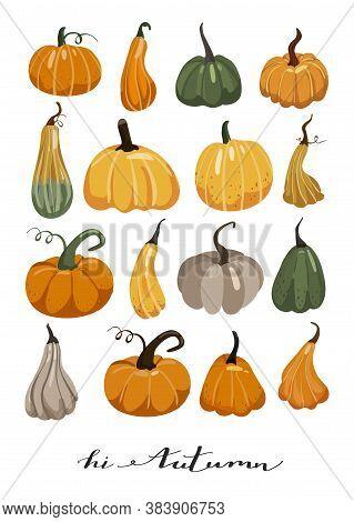 Autumn Illustration. Set Of Various Pumpkins. Stylish Typography Slogan Design