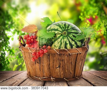 Fresh Watermelon In A Basket On A Wooden Table, A Crop Of Vegetables