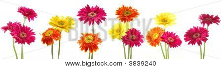 Bunch Of Gerbera Flowers