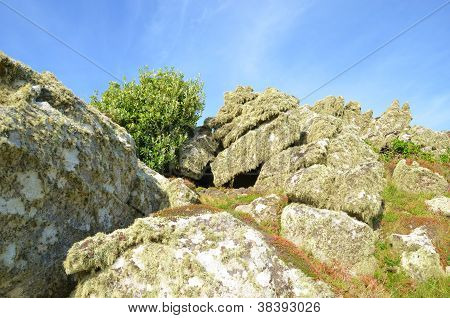 Rocks and vegetation