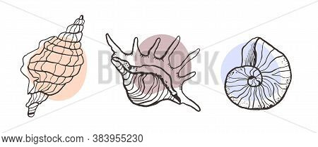 Shells Collection Sketch Style. Vector Set With Seashells For You Design And Scrapbooking. Line And
