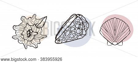 Collection Of Sketch Style Seashells In Line And Spot Style. Design For Seafood Restaurant Menu, Oce