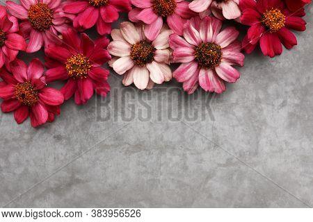 Beauty Zinnias On A Gray Textured Background.
