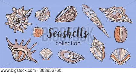 Vector Set With Seashells On A Light Background. Sketch Style Seashells With Color. Fish Restaurant,