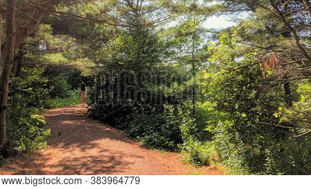 Cavendish, Pei - August 4 2019: Girl Walks Through The Woods Of The Heritage Site Where Anne Of Gree