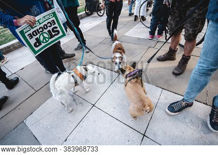 London / Uk - 2020.09.05: Dogs At Extinction Rebellion Protest At Parliament Square