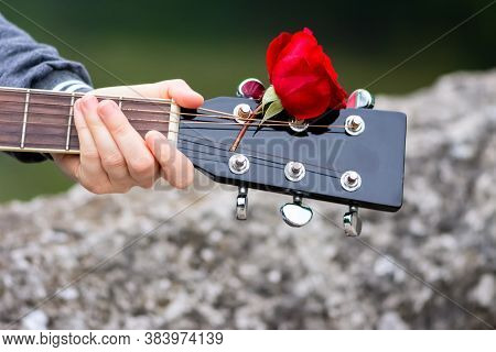 Close Up Of Guitar Headstock Decorated By Red Rose. Girl Holding Guitar Outdoor