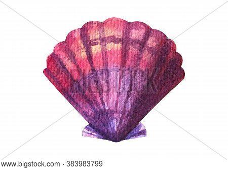 Seashell Watercolor Illustration. Hand Drawn Underwater Element Design. Artistic Marine Design Eleme