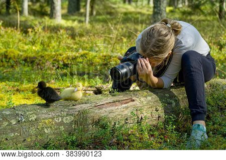 Young Girl Takes Pictures Of Cute Ducklings In The Forest. Learning In Photographing Children, Train