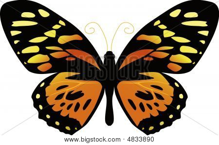 Butterfly On A White Background Yellow Color