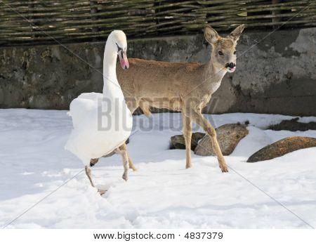 Swan And Deer