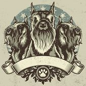 Schnauzer Terrier Crest Design. Vector illustration of three purebred schnauzer dogs (front and profile view) sitting proudly over a grunge banner and floral design elements. poster