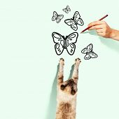 Image of siamese cat catching drawn butterfly poster