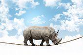 huge rhino balance on rope poster