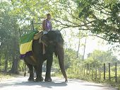 Low angle view of a young man riding on elephant with trees in background poster