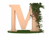 The letter twined ivy stay on a grass poster