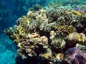 fish and coral and Underwater life of red sea poster