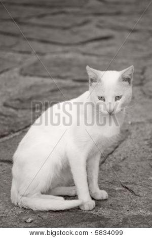 Cat In La Puebla De Sanabria