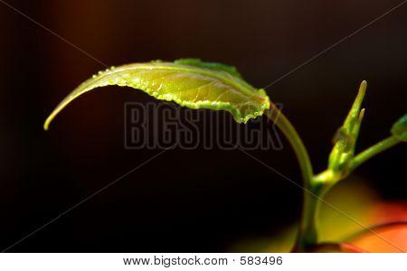 New Tree Leaf